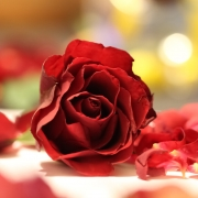 bibi_rose