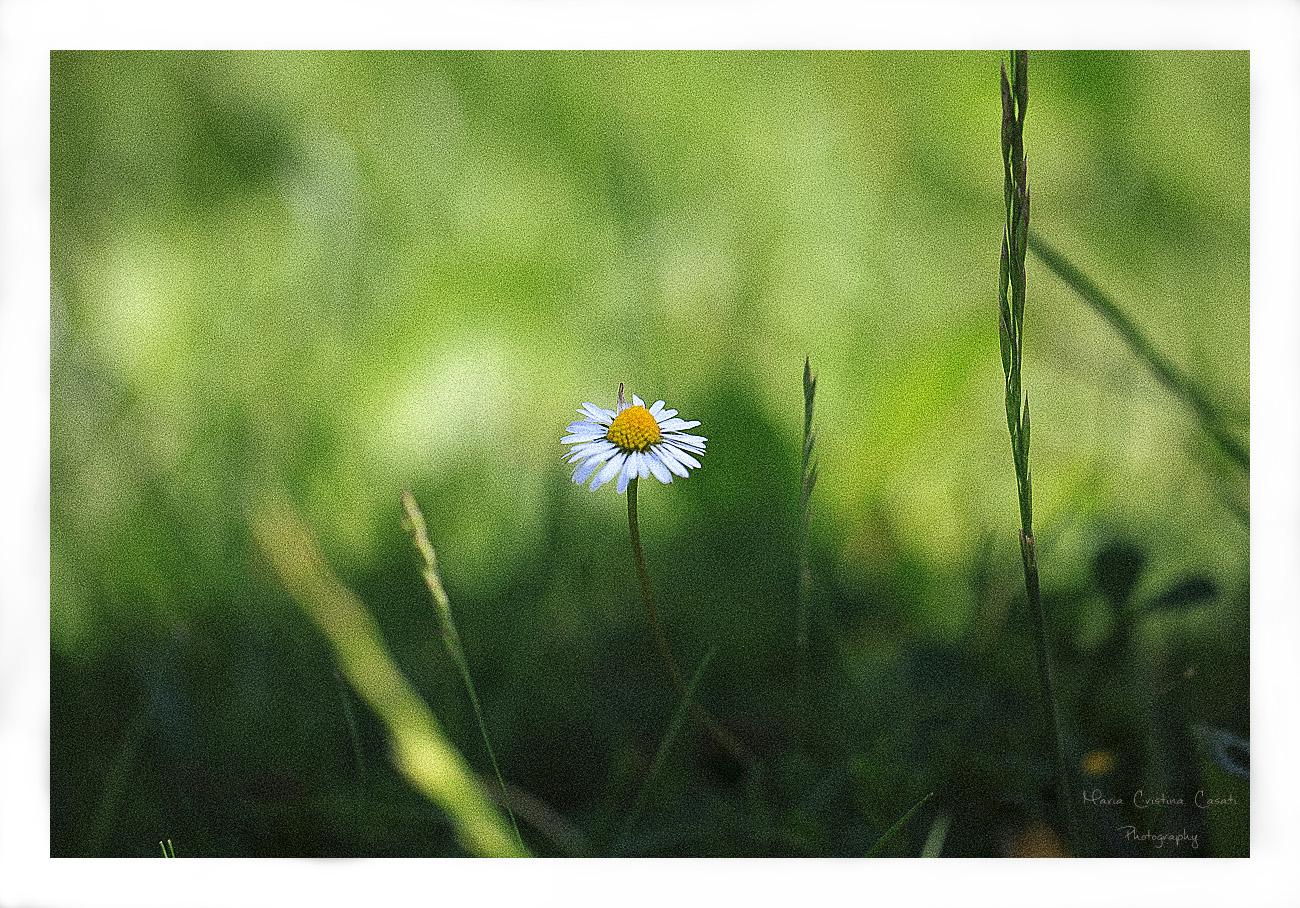 daisy_0309_01